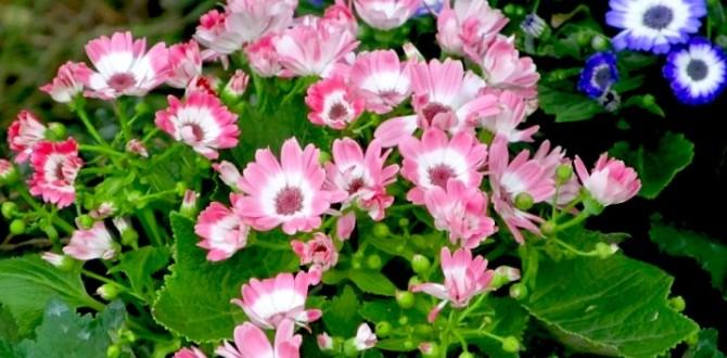 flower-img